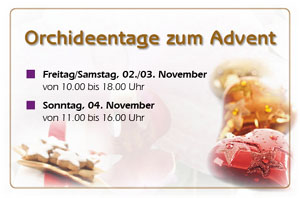 Orchideentage zum Advent